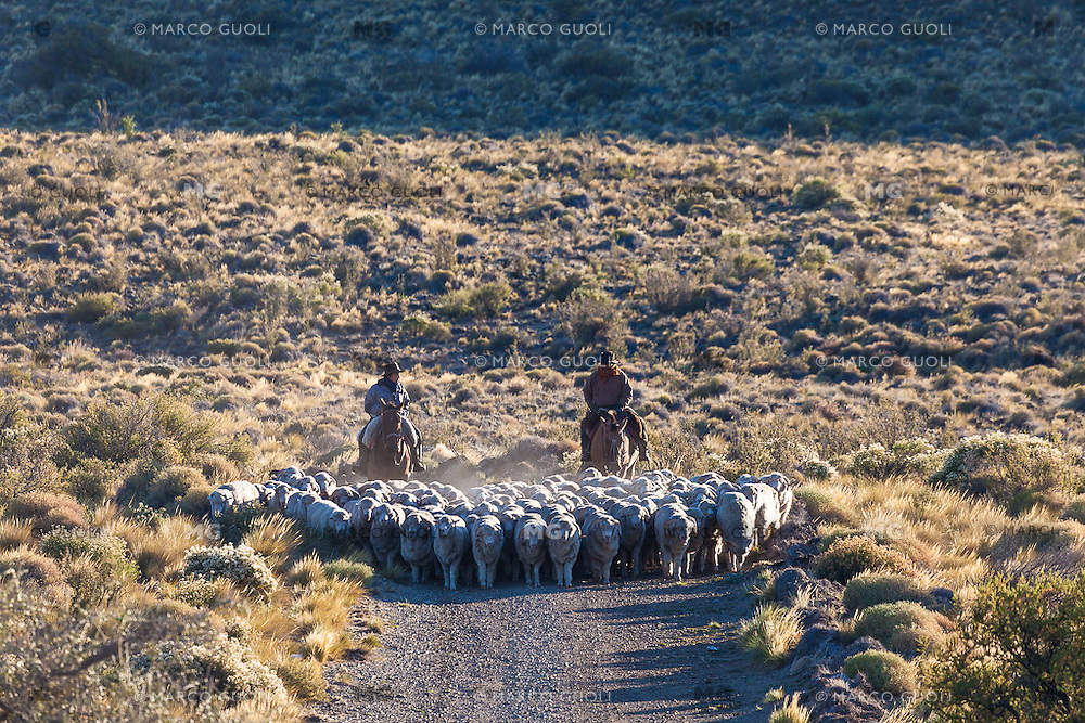 PEONES ARREANDO OVEJAS (CARNEROS), ESTANCIA LELEQUE, PROVINCIA DEL CHUBUT, ARGENTINA (PHOTO © MARCO GUOLI - ALL RIGHTS RESERVED)