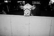 .The 2011 Lodi Agricultural Fair in Lodi, Wisconsin.