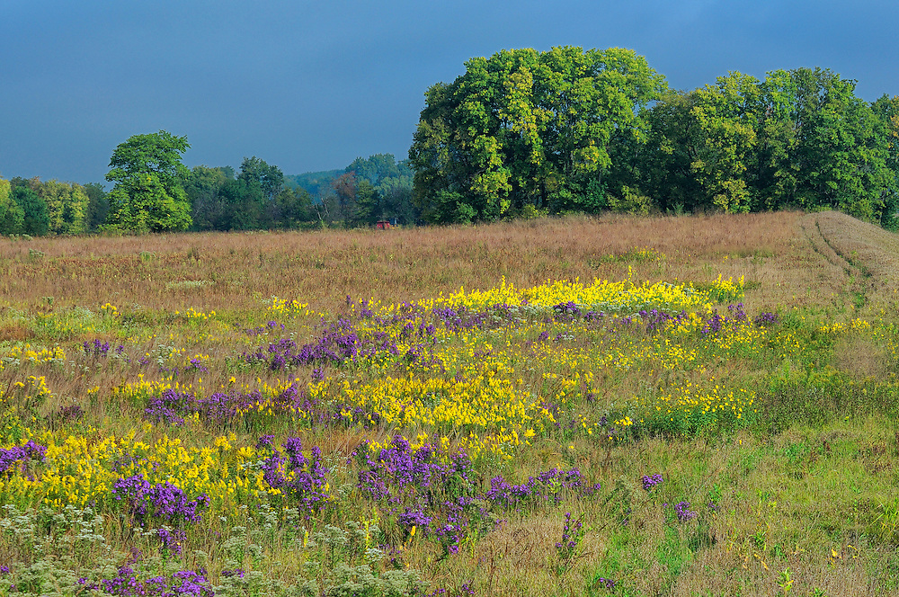 Fall Flowers, near Hooppole, Illinois, USA