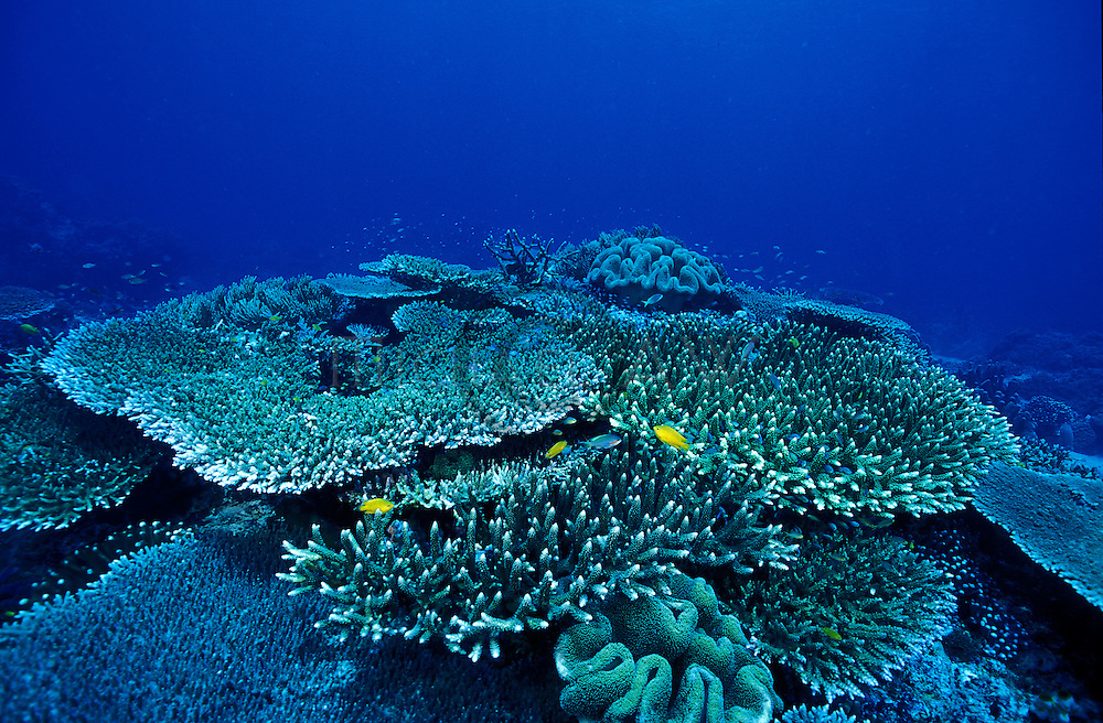 Reef meadow.Apo Reef
