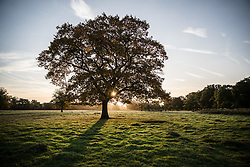 © Licensed to London News Pictures. 17/10/2017. London, UK. First light in Bushy Park.  Storm Ophelia is expected to hit parts of Scotland later today. Photo credit: Peter Macdiarmid/LNP