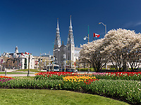 Notre-Dame Cathedral Basilica, blossoming trees in tulips in a park in spring 2017 during the tulip festival in Ottawa, Ontario, Canada. 2017