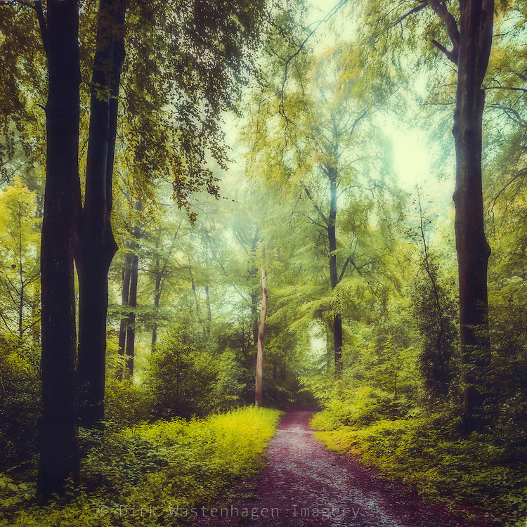 Path through a misty forest in morning light<br />