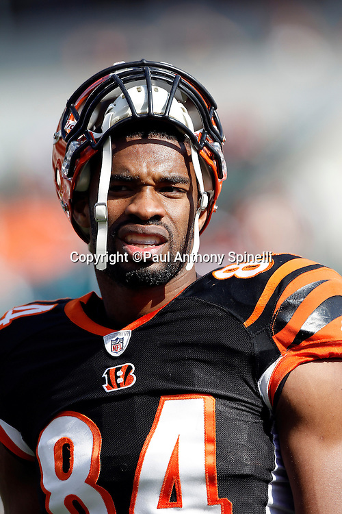 Cincinnati Bengals tight end Jermaine Gresham (84) looks on during the NFL week 8 football game against the Miami Dolphins on Sunday, October 31, 2010 in Cincinnati, Ohio. The Dolphins won the game 22-14. (©Paul Anthony Spinelli)