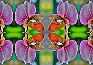 Orchid Mandala
