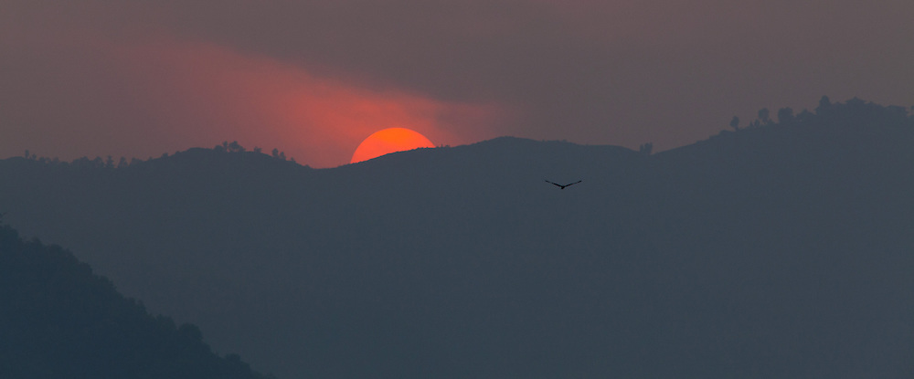 Silhouette of a Black Kite, Milvus migrans, flying in front of hills at sunset, Pokhara, Nepal