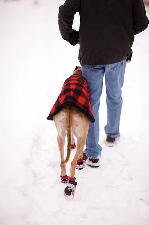 Greyhound Rescue Fostering, Fast Friends