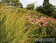 Coneflowers, drought tolerant grasses, and Stephanandra illustrate water wise gardening at Cornell Botanic Gardens