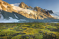 Glaciated Peaks of Boulder/Salal Divide near Athelney Pass. In the foreground are mossy hummocks covered in low willow plants. Coast Range British Columbia Canada