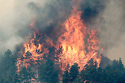 Trees are engulfed in flames in Colorado's High Park Fire, about 15 miles northwest of Fort Collins June 11, 2012.  The fire was estimated to be at 37,000 acres according to the county sheriff June 11, 2012. REUTERS/Rick Wilking  (UNITED STATES)