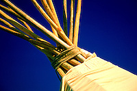 Tipi Poles against Blue Plains Sky, Pasqua First Nation, Saskatchewan