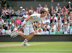 © London News Pictures.. 03/07/2013. Andrew Murray during his match with Fernando Verdasco, Spain in the men's quarter finals at the 2013 Wimbledon Lawn Tennis Championships . Andy Murray went on to win in the final becoming the first British male to win the tournament in 77 years. Photo credit: Mike King/LNP