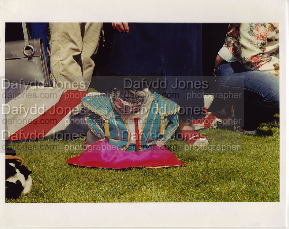 a pug owners picnic. Pug  dressed as matador at glyndebourne. 2003 ONE TIME USE ONLY - DO NOT ARCHIVE  © Copyright Photograph by Dafydd Jones 66 Stockwell Park Rd. London SW9 0DA Tel 020 7733 0108 www.dafjones.com<br /> a pug owners picnic. Pug  dressed as matador at glyndebourne. 2003 ONE TIME USE ONLY - DO NOT ARCHIVE  ¬© Copyright Photograph by Dafydd Jones 66 Stockwell Park Rd. London SW9 0DA Tel 020 7733 0108 www.dafjones.com