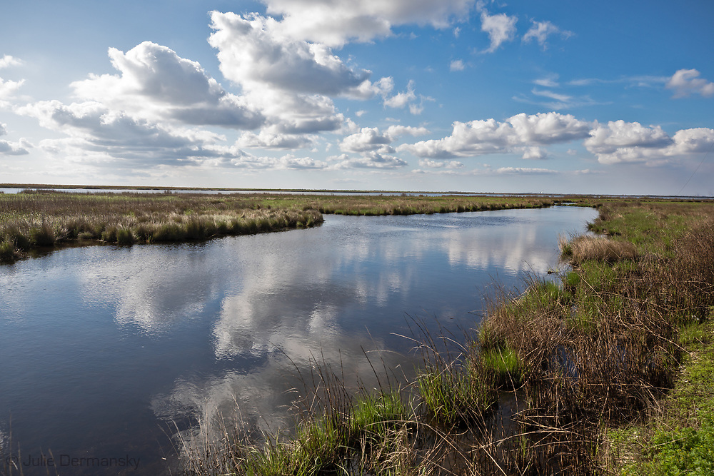 Grassy Bayou, Louisiana- the view from Bayou Sale Rd.