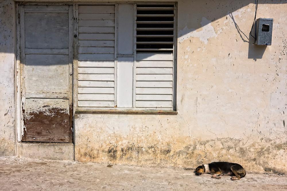 Dog and house in Mariel, Artemisa, Cuba.