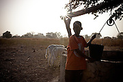 Two boys watering calfs / cows. Lamine Diao, 9yrs (R) Amadou Diao, 9yrs (L)