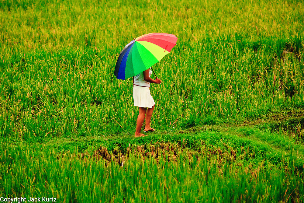 Apr. 21 - UBUD, BALI, INDONESIA: A woman walks through a rice paddy in the rain in Ubud, Bali.  Photo by Jack Kurtz/ZUMA Press