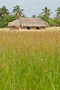 Thatched hut in field, Ghana, West Africa..