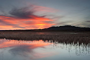 A colorful sunset is reflect in a marsh at the Bosque del Apache National Wildlife Refuge near Socorro, New Mexico. About 10,000 sandhill cranes winter in the refuge, feeding in the wetlands.