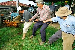 Marcação do gado iniciou-se com a finalidade de cada proprietário inentificar com facilidade os seus animais. Os símbolos utilizados são, na maioria das vezes, as iniciais do nome do dono. Grande número de crendices cercam a marcação que é considerada uma festa para a qual são convidados os peões, amigos e parentes. FOTO: Jefferson Bernardes / Preview.com