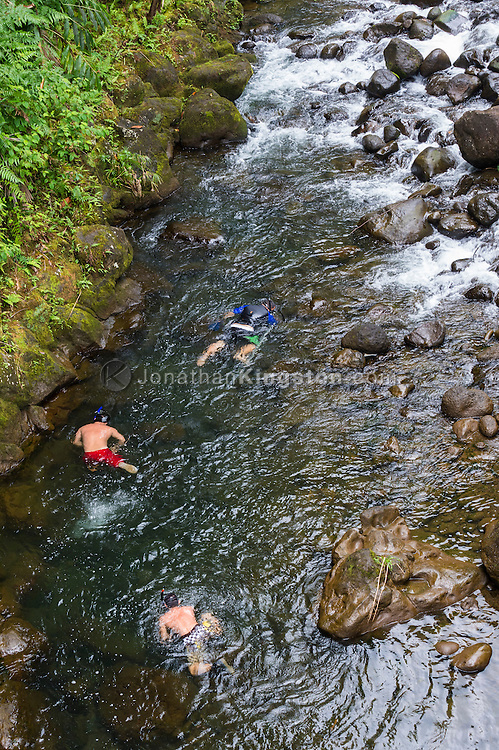 Three boys snorkel for freshwater crawfish in a stream near Hilo, Hawaii.