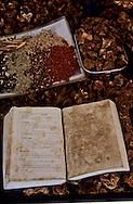 traditional pharmacy and chinese medecine in  Namwan  Korea   pharmacie traditionnelle sur le marche de  Namwan  coree  ///R20134/    L0006876  /  R20134  /  P105115//////Andouillers de cerf, écailles de pangolin, champignons de longue vie et herbes des montagnes indispensables à la pharmacopée traditionnelle sont vendus au marché de Namwon, dans la province du Jeollabuk-do, au nord des Monts-Jiri.