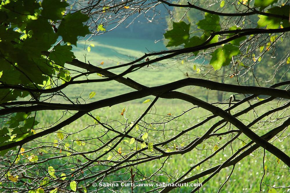 Tri Brook Road farm fields, through a screen of maples