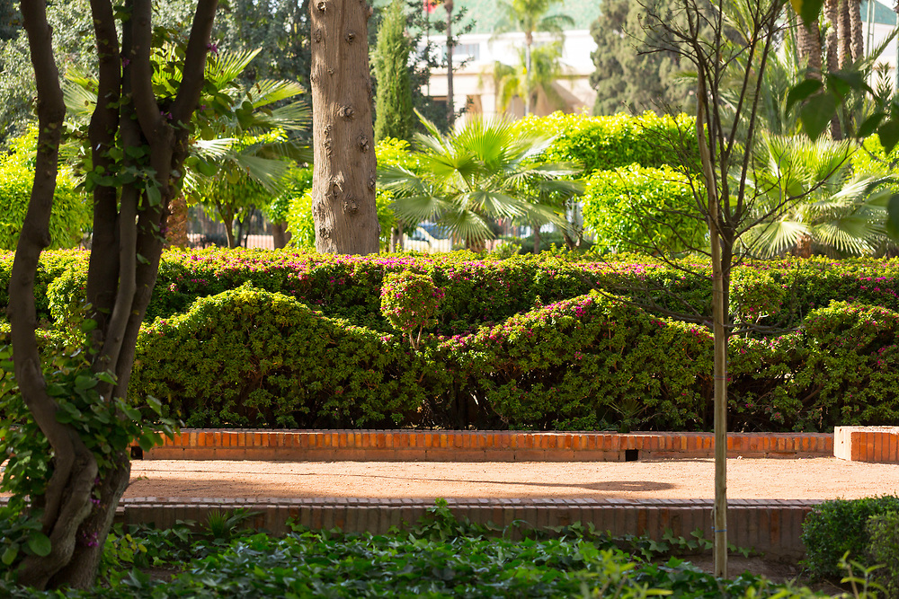Cyber Park, Marrakesh, Morocco, 2016-04-20.<br /><br />It's easy to miss the tranquil, chilled out garden spaces found in the Koutoubia and Cyber parks, just opposite the bustling Djemma El Fna main square in Marrakesh.