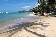 Tropical landscape of palm trees and sandy beach, Mirissa, Sri Lanka, Asia shadow of palm tree