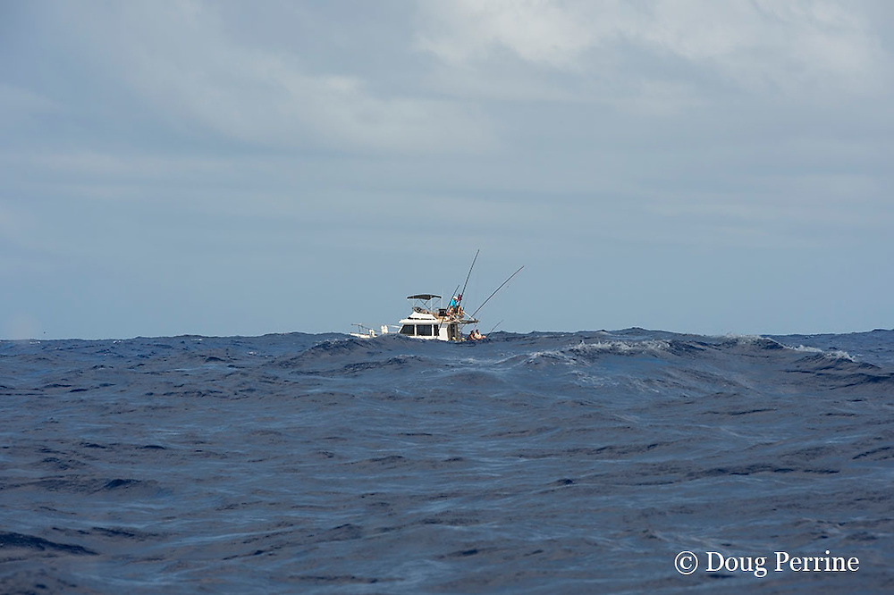 anglers on a sportfishing boat hooked up to a marlin and fighting it, Vava'u, Kingdom of Tonga, South Pacific