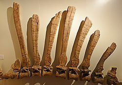 15.03.2016, Museum fuer Naturkunde, Berlin, GER, Naturkundemuseum Berlin, im Bild Teil der Wirbelsaeule und Rueckenknochen eines (Spinosaurus aegyptiacus), groesster bisher bekannter Raubsaurier // Exhibits in the Natural History Museum Museum fuer Naturkunde in Berlin, Germany on 2016/03/15. EXPA Pictures © 2016, PhotoCredit: EXPA/ Eibner-Pressefoto/ Schulz<br /> <br /> *****ATTENTION - OUT of GER*****
