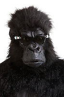 Young man in gorilla costume wearing sunglasses against white background