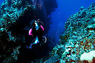 Scuba Divers, Grand Cayman
