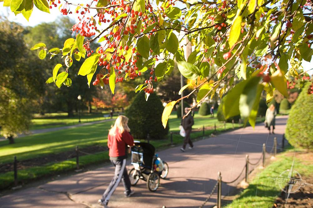 Public Gardens in Boston, MA