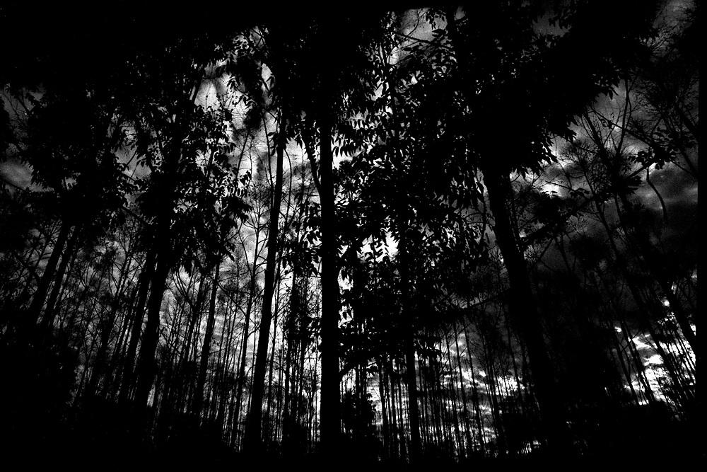 Turmalina_MG, 2004...Floresta na comunidade de Buriti Quebrado...A forest in Buriti Quebrado community...Foto: LEO DRUMOND /  NITRO