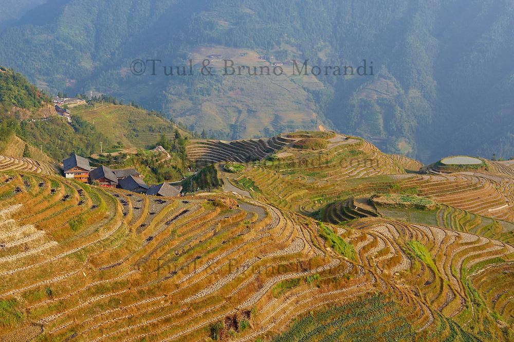 """Chine, Province du Guangxi, region de Longsheng,  rizières de """"l'épine dorsale du dragon"""" de Longji Titian// China, Guangxi province, rice terraces at Longji around Longsheng"""