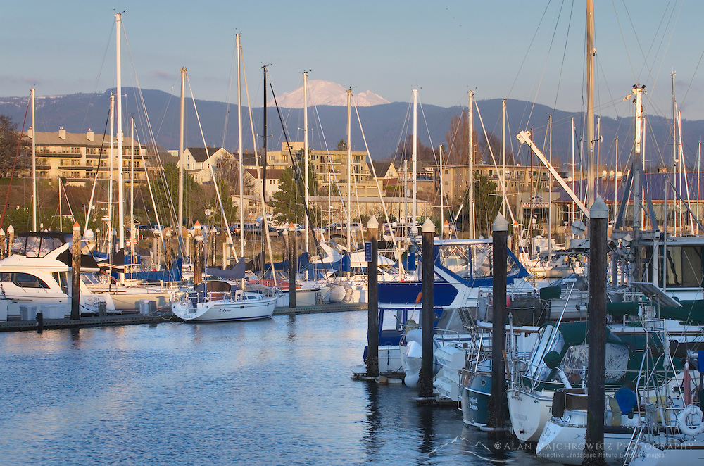 Yachts in the Squalicum Marina, with Mount Baker looming in the background, Bellingham Bay Washington