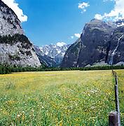Wildflower Meadows, Gastern Valley