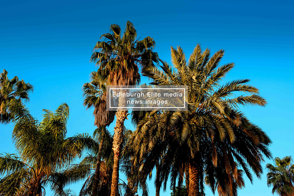 Dawn in the garden at the Palais Riad Hida, Oulad Barrehil, Taroudant Province, Souss-Massa region, Morocco, North Africa<br /> <br /> (c) Andrew Wilson | Edinburgh Elite media