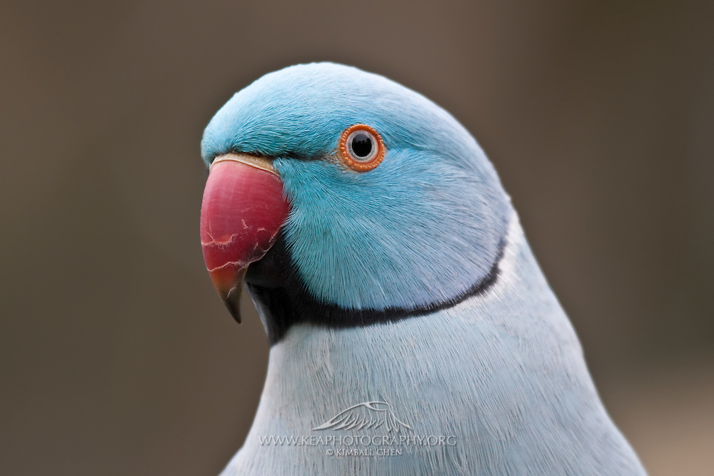 Top 10 Most Beautiful Birds of Indian Subcontinent