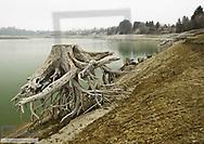 abgestorbene Wurzel im Forggensee, Bayern, BRD