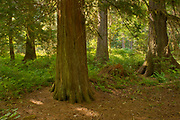 Forest along the Exchampsiks River<br />Exchampsiks River Provincial Park<br />British Columbia<br />Canada