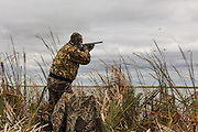 Photo No 8 of series - Hunter kills canvasback drake on open water marsh.