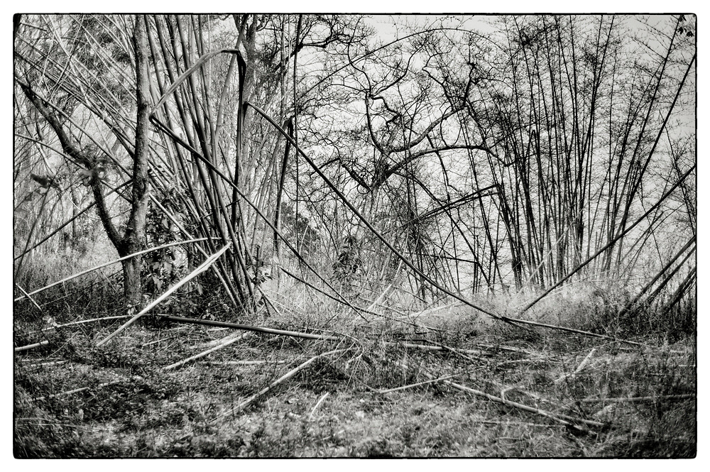 "An impenetrable bamboo forest in the grounds of the Pha Koeng Buddhist temple, Chaiyaphum Province, Northeast Thailand, 2014. From the series ""Pha Koeng"" (2011-2017)."