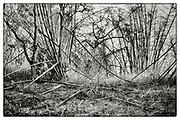 """An impenetrable bamboo forest in the grounds of the Pha Koeng Buddhist temple, Chaiyaphum Province, Northeast Thailand, 2014. From the series """"Pha Koeng"""" (2011-2017)."""