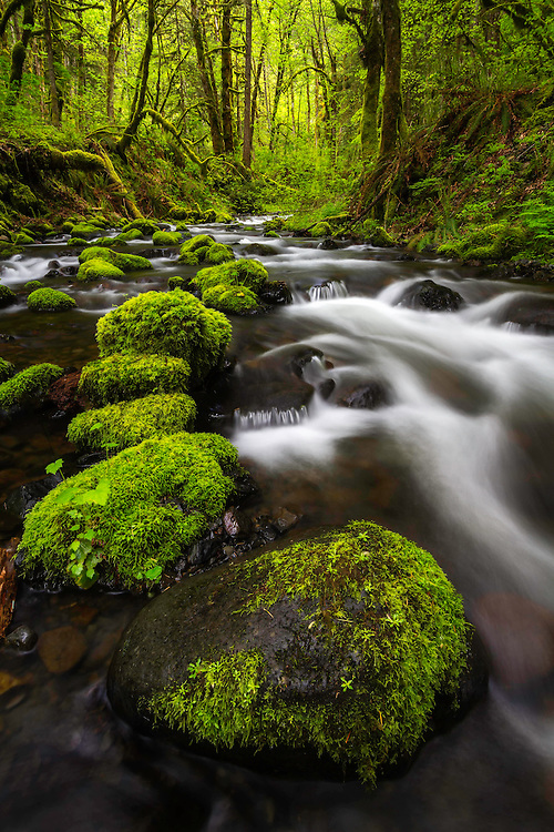 A boulder path through Gorton Creek in the Columbia River Gorge on a beautiful Spring Day.