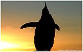 Antarctica-Wildlife