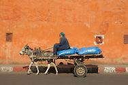 Man, donkey and cart, Marrakesh