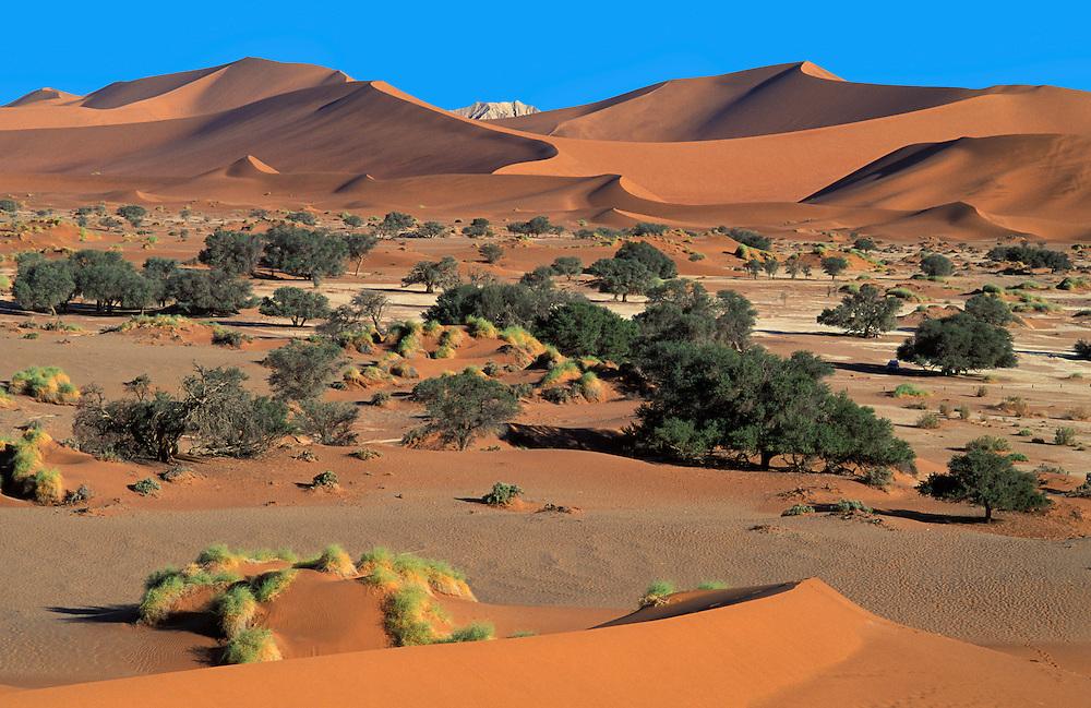 Sandduenes, Sossuvlei Namib Naukluft Park, Namibia, Africa