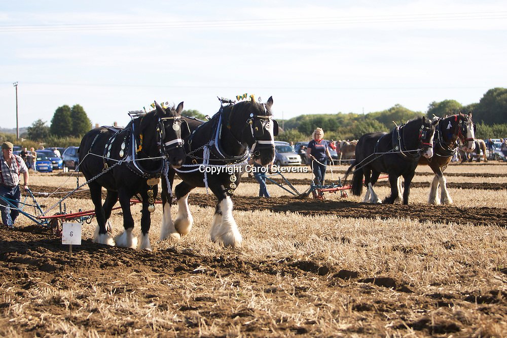 Northern Heavy Horse Society Annual Ploughing Match 2013<br />